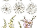 Drawing Of Daisy Flowers Pin by Aakira On Flower Drawings Art Tattoos