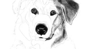 Drawing Of Dog From Photo How to Draw A Dog Free Graphite Art Lesson Art Drawing