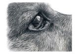 Drawing Of Dog Fur How I Draw Dogs Eyes Youtube Fur In 2018 Pinterest Draw Art