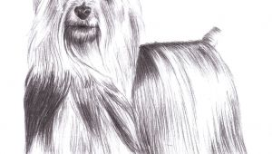 Drawing Of Dog Standing Up 9 5 Aud Silky Terrier Dog Standing Pet Pencil Art Signed A4