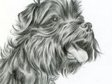Drawing Of Dog Tracks 35 Best Colored and Graphite Pencil Dog Drawings Images In 2019