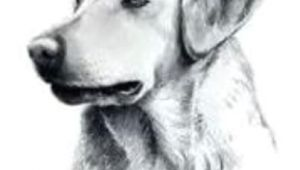 Drawing Of Dog Treats some Bailey S Choice Pet Treats Recalled Due to Salmonella Concerns