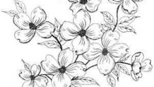 Drawing Of Dogwood Flower 18 Best Dogwood Images Dogwood Flowers Dogwood Flower Tattoos