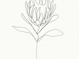 Drawing Of Exotic Flowers Pin by Lexxxxi On Tattoo Ideas Drawings Art Single Line Drawing