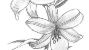 Drawing Of Flower Blooming Lily Flowers Drawings Flowers Madonna Lily by Syris Darkness