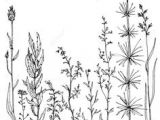 Drawing Of Flower Composition 28 Best Line Drawings Of Flowers Images Flower Designs Drawing