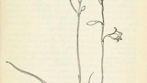 Drawing Of Flower Field Field Book Of Western Wild Flowers Botanical Illustration Wild