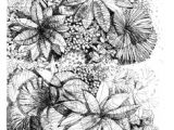 Drawing Of Flower Scenery 387 Best Landscape Design Drawing Images Architectural Drawings