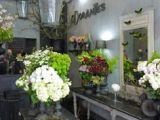 Drawing Of Flower Shop 1865 Best Flower Shop Interiors Images In 2019 Flower Shop Decor