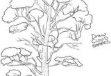 Drawing Of Flower Tree 865 Best How to Draw Nature Flowers Trees and More Images In 2019