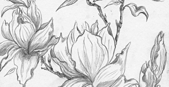 Drawing Of Flower Tree From A Selection Of Henny S Magnolia Drawings and Sketches
