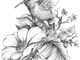 Drawing Of Flowers with Birds Hummingbird E E Done for A Book Cover A4 Size Hb 3b 6b Acrylic