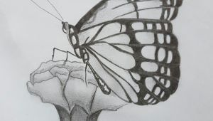 Drawing Of Flowers with butterfly Beautiful butterfly Sat On the Flower Drawing butterfly Flower