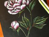 Drawing Of Flowers with Colour Peony Art Peonies Drawing Flower Pencil Art Coloured Pencil