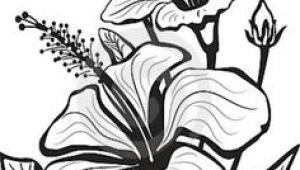 Drawing Of Gumamela Flower 1412 Nejlepa A Ch Obrazka Z Nasta Nky Flower Drawings Drawings
