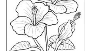 Drawing Of Gumamela Flower with Parts 11 Best Hibiscus Drawing Images In 2019 Hibiscus Drawing Hibiscus