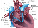 Drawing Of Heart Blood Flow How Your Heart Works Cardiac Health