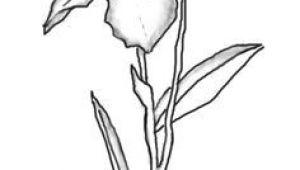 Drawing Of Iris Flower 245 Best Iris Images In 2019 Painted Flowers Iris Painting Silk