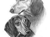 Drawing Of My Dog 119 Best Dog Line Art Drawing Images Dog Art Dachshund Dog Dog