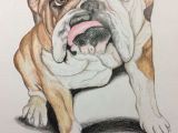 Drawing Of My Dog This is A Bulldog Portrait I Drew I Love Drawing and Bulldogs are