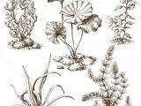 Drawing Of Nature Flowers Sketch Of Underwater Plants Flowers Plants Nature Tattoo