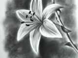 Drawing Of Realistic Flowers Image Result for Realistic Drawings Of Flowers Draw Pencil
