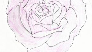 Drawing Of Rose and Heart Heart Shaped Rose Drawing Heart Shaped Rose by Feeohnah Art