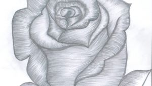 Drawing Of Rose Bud Rose Bud Drawings In 2018 Pinterest Draw Rose Buds and Pencil