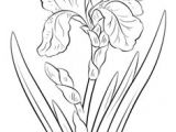 Drawing Of Rose Plant 87 Best How to Draw Flowers Plants Images Drawing Flowers