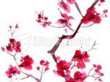 Drawing Of Sakura Flower 85 Best Japanese Cherry Blossom Art Images Blossom Tree Tattoo