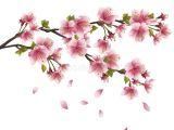 Drawing Of Sakura Flower Download Sakura Blossom Japanese Cherry Tree Stock Vector Image