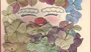 Drawing Of Santan Flower Pressed Hydrangias with Pastel Drawing Of Santa Dried and Pressed