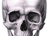 Drawing Of Skull Head Pin by Yuliya Osyka On Fine Arts Skull Reference Skull Art Drawings
