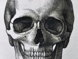 Drawing Of Skull Head Vector Black and White Illustration Of Human Skull with A Lower Jaw