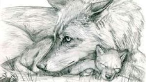 Drawing Of Wolf Cub 180 Best Wolf Drawings Images Drawing Techniques Drawing