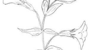 Drawing Pictures Of Flowers with Names why Flowers and Things Doesn T Work for Everyone