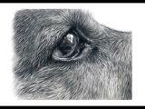 Drawing Realistic Dog Eyes How to Draw German Shepherd Eyes Youtube Art In 2019 Drawings