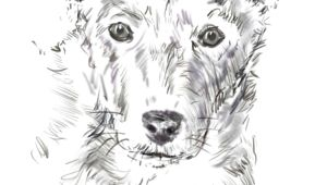 Drawing Realistic Dog Hair How to Draw A Dog From A Photograph