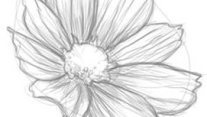 Drawing Realistic Flowers Tutorial 100 Best How to Draw Tutorials Flowers Images Drawing Techniques