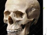 Drawing Skull Model 75 Best Skull Construction Images Drawings Anatomy Reference