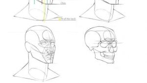 Drawing Skulls Proportions Pin by E I I On I Eµ Pinterest Drawings Anatomy Drawing and