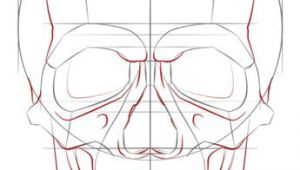 Drawing Skulls Tutorial How to Draw A Human Skull Step by Step Drawing Tutorials for Kids