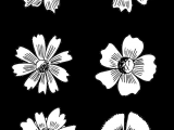 Drawing Stencil Flowers Related Image Drawing Journal Flowers Drawings
