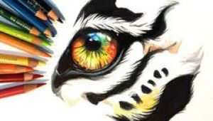 Drawing Tiger Eye 10 Best Tiger Eye S Images Tiger Drawing Eyes Drawings Of Tigers