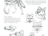 Drawing Wolf Anatomy 14 Anatomy Drawing Wolf for Free Download On Ayoqq org