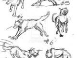 Drawing Wolf Anatomy 61 Best Wolf Images Wolves Drawing Ideas Drawings
