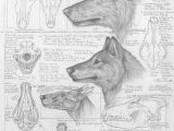 Drawing Wolf Anatomy Differences Between Dire Wolves and Grey Wolves Via the Palaeocast