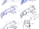 Drawing Wolf Anatomy Guides to Drawing Wolves How to Pinterest Drawings Animal