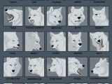 Drawing Wolf Face Step Step 25expressions Challenge Wolf by Tanathe Deviantart Com On