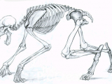 Drawing Wolf Legs Anatomy Of A Werewolf Google Search Draw Paint Werewolf